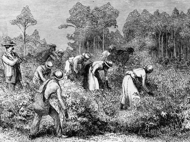 plantation master.jpg