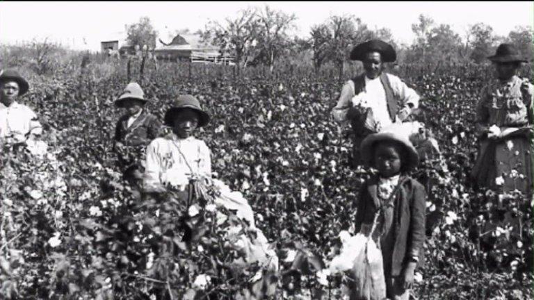 black slaves-in-cotton-field
