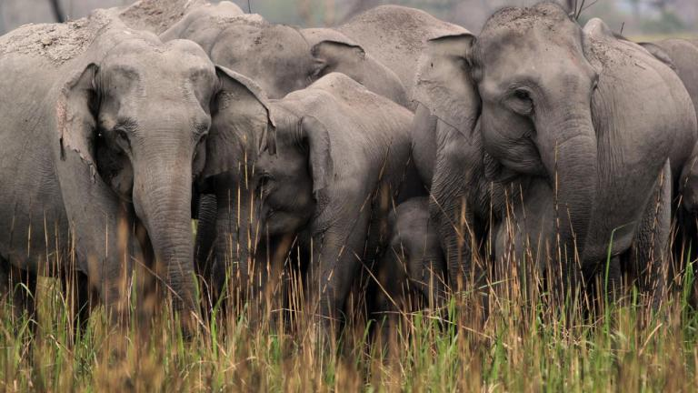 elephants on NGEO